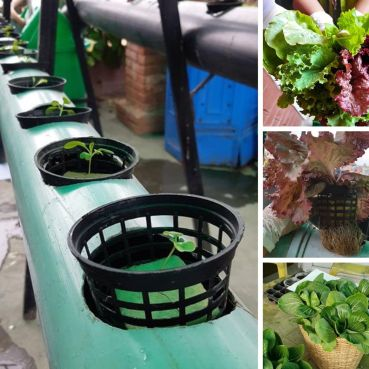 Hydroponics: From your roof to your kitchen image